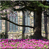 SO9198 : Spring blooms in St Peter's Church Gardens, Wolverhampton by Roger  Kidd