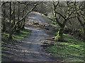 SN7723 : Farm road above Gellygron by Trevor Littlewood