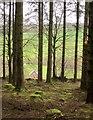 SS9928 : Woodland, Upton by Derek Harper