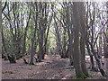 TL7906 : Spring sunlight in Woodham Walter Common by Roger Jones