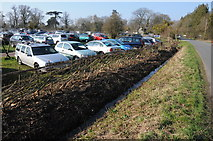 SO8845 : Newly laid hedge and Croome Court car park by Philip Halling