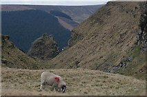 SK1491 : Sheep at Alport Castles by Peter Barr
