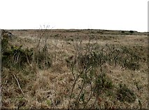 J0424 : Whins and Tussocky Grass on Camlough Mountain by Eric Jones