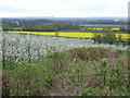 TQ7449 : Looking across apple orchards to the Weald by Marathon