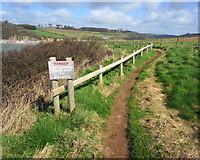 SX6146 : Coastal erosion on the S. West Coast Path by jeff collins