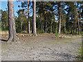 TQ0858 : Scots pines by Alan Hunt
