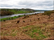 J0324 : Last year's bracken on the lower slopes of Camlough Mountain by Eric Jones