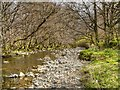 NY3921 : Aira Beck Below Dockray Bridge by David Dixon