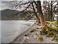 NY3818 : Ullswater Shore, Glencoyne by David Dixon