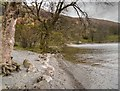 NY3818 : Ullswater Shore at Glencoyne by David Dixon