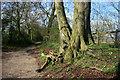 SU6992 : Shakespeare's Way near Dame Alice Farm by Des Blenkinsopp