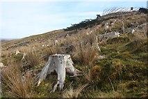 NN1067 : At Blàr a' Chaorainn, clear-fell returns slowly to rough grassland by Alan Reid