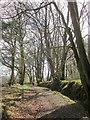 ST4301 : Wessex Ridgeway, Lewesdon Hill by Derek Harper