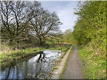 SD7909 : Approaching The End Of The Canal by David Dixon