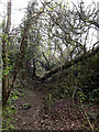 TM3569 : Fallen Tree across Loves Lane footpath by Adrian Cable