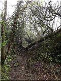 TM3569 : Fallen Tree across Loves Lane footpath by Adrian Cable