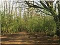 TQ3210 : Upper Lodges Wood by Simon Carey
