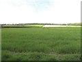 TG1034 : Wheatfield by Adrian S Pye
