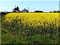 SD3501 : Rapeseed with Well Cottage on the skyline by Norman Caesar