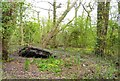 SZ3296 : Part Fallen Tree at Lymington Reed Beds by Mike Smith