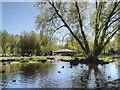 SD4214 : Martin Mere Wetlands Centre, Lake near the Visitor Centre by David Dixon