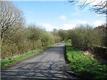 NY0220 : The lane to Arlecdon by David Purchase