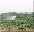 TF9016 : Fields by Lilac Farm by Evelyn Simak