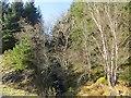 NM6731 : Burn and woodland by Richard Webb
