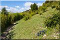 TQ2252 : North Downs Way by Ian Capper