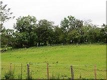 H2495 : Field near Castlefinn by Richard Webb