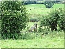 H2494 : Trackbed, Finn Valley Railway by Richard Webb