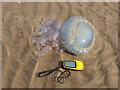 SJ0985 : Barrel jellyfish marooned on Barkby Beach by John S Turner