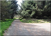 J0525 : The Camlough Wood Forestry Road by Eric Jones