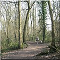 SP0265 : Walking in Walkwood Coppice, Walkwood, Redditch by Robin Stott