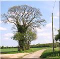TF9635 : Old oak tree beside rural lane by Evelyn Simak