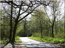 SU8415 : Lane east of Staple Ash Farm by Chris Gunns