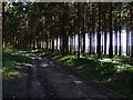 SU8416 : Track in Bepton Woods by Chris Gunns