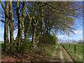 SU8417 : Track on Bepton Down by Chris Gunns