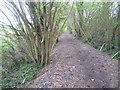 TQ4562 : The view up Snag Lane by Marathon
