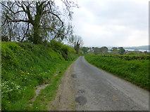 C3322 : Narrow road, Inch Island by Kenneth  Allen