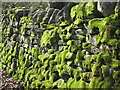 NY8548 : Mossy dry stone wall by the River East Allen by Mike Quinn