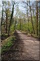 SO6113 : Cycle track near Serridge Inclosure by Philip Halling