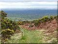 SJ0775 : Llwybr Clawdd Offa / Offa's Dyke Path by Ian Medcalf