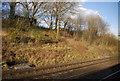SU7574 : In the Woodley Cutting by N Chadwick