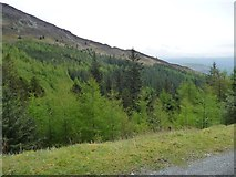 NY2427 : Conifers in the valley of Scalebeck Gill by Christine Johnstone