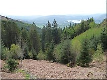 NY2427 : The top of Lyzzick Wood, south-east of Dodd summit by Christine Johnstone