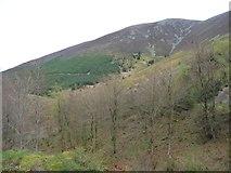 NY2427 : Longside Wood, west of Gable Gill by Christine Johnstone