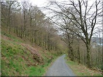 NY2427 : Track through deciduous woodland, north side of Dodd by Christine Johnstone