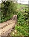 ST1935 : Lane to Lower Aisholt by Derek Harper
