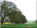 NZ1109 : Tree-lined avenue at Dalton Fields by Oliver Dixon